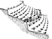 Fanya juu for Terrace farming diagram