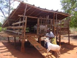 Goats New With Animal Welfare Information