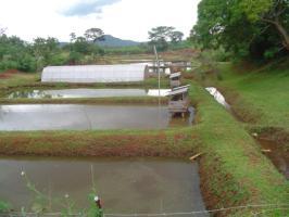 Fish farming (new, with animal welfare information) | Infonet
