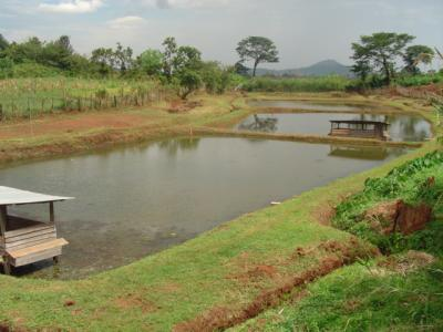 Fish farming (new, with animal welfare information