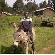 naked women riding donkeys