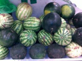 Watermelon | Infonet Biovision Home