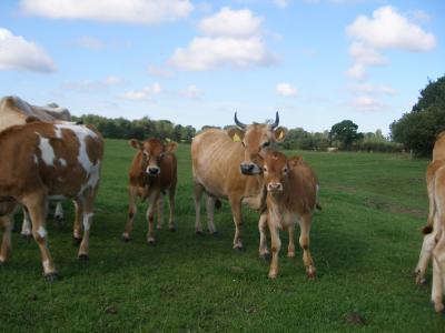 A calf life worth living | Infonet Biovision Home