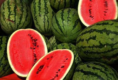 Watermelon Infonet Biovision Home