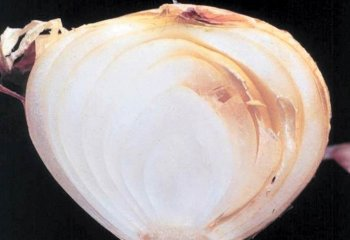 <b>Sour skin</b><i> (Pseudomonas cepacia)</i> of onion.