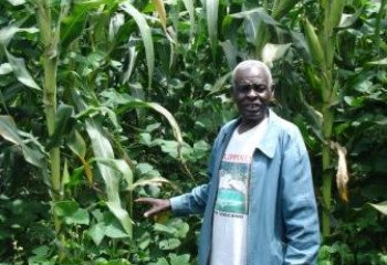 Conservation Agriculture adopter