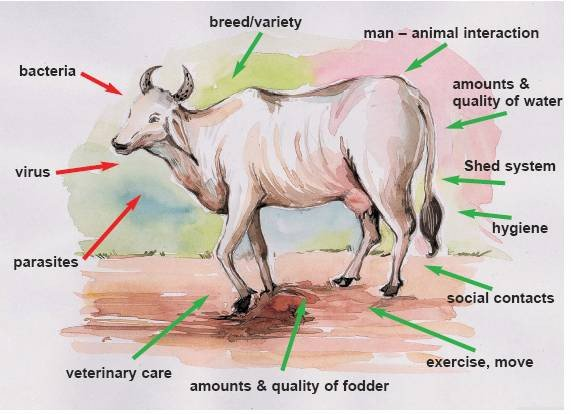 <p>Bacteria, viruses and parasites attacking the farm animal which fights back with its immune system. The farmer can influence both sides of this balance</p>      <p>© Ifoam Training Manual for Organic Farming in the Tropics</p>