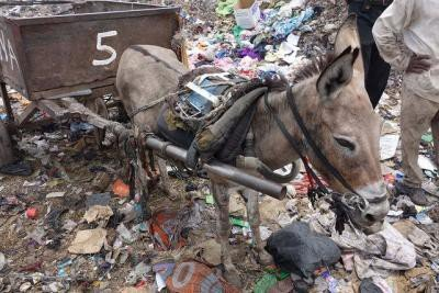 <p>Here an example of an overworked, overloaded and underfed donkey 'Naira' on the rubbish dumps of Bamako, Mali. Owners of working animals are responsible that animals are held without suffering.   Across Africa and the Middle East, SPANA clinics treat hundreds of thousands of donkeys, horses, mules, camels and livestock every year. They education programme teaches children and owners respect and compassion for animals. During conflict, drought and natural disaster, their emergency programme gets help to animals and the communities who depend on them.</p>      <p>(c) <a href=