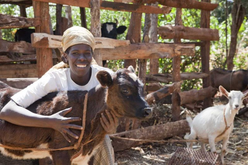 <p><b>Calf in central Kenya</b> all animals (domestic and wild) have an intrinsic value and an interest in being free from suffering. It is our responsibility to ensure the wellbeing of animals whenever our activities impact on them.</p>      <p>(c) Biovision</p>