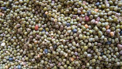 <p><b>Green grams</b> for protein</p>      <p>(c) A. Wachira, KARI, Kenya</p>
