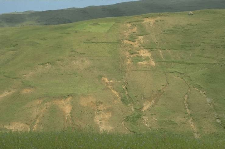 "<p><b>Sheet and rill erosion </b>in barley field (Ethiopia)</p>      <p>(c) Gudrun Schwilch, Berne, Switzerland (Reproduced from WOCAT, <a href=""http://www.wocat.net"">www.wocat.net</a>)</p>"