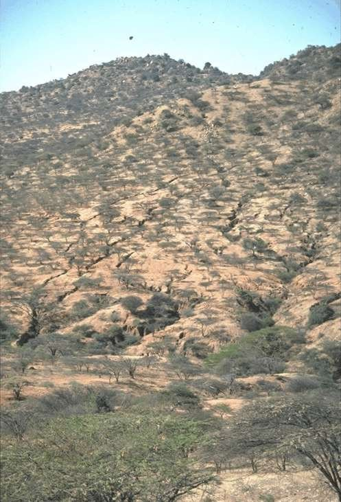 """<p><b>Erosion form overgrazed communal land</b>: gully and sheet. Even with good tree bush cover, erosion is high (Kenya).</p>      <p>(c) Hanspeter Liniger, Berne, Switzerland (Reproduced from WOCAT, <a href=""""http://www.wocat.org"""">www.wocat.org</a>)</p>"""
