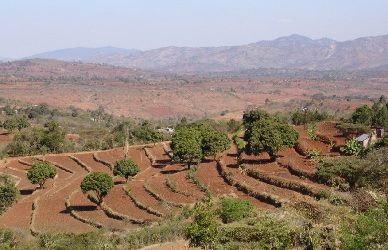 <p><b>Fanya juu terraces</b> in a semi-arid area which have developed over time into benches: note well established grass strips along the bunds (Kenya).</p>      <p>© Hanspeter Liniger, WOCAT</p>