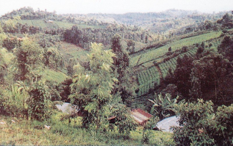 <p>Well-conserved,<b> intensively farmed hillsides</b>, central Kenya</p>      <p>(c) C. Gachene and G. Kimaru, RELMA, 2003</p>