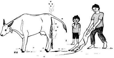 <p>Cow showing a <b>stillborn foetus and placenta</b></p>      <p>(c) Agromisa Foundation and CTA, Wageningen, 2008.</p>