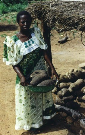 <p><b>Yam marketing</b>. Yam (<i>Dioscorea alata</i>) marketing at Korogho, Cote d'Ivoire, June 1999.</p>     <p>(c) Courtesy EcoPort (<a href=