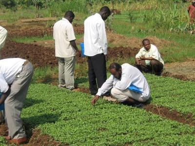 Scouting on a kale nursery by icipe trainees