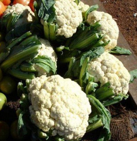 Cauliflower (Brassica oleracea var. botrytis)