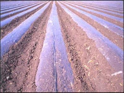 Soil solarization with plastic planes