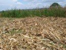 Crop residue used as soil cover