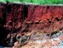 Soil profile showing horizons and plant roots