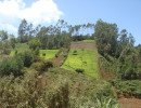 Well managed hillsides in Kangari, Kenya